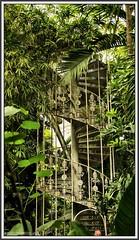 P1260205 Kew Gardens Palm House..