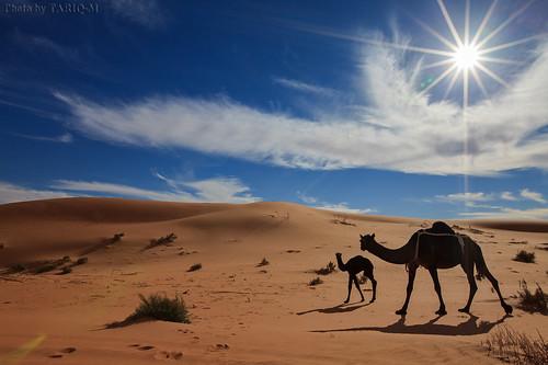 art texture sahara landscape sand waves pattern desert ripple patterns dunes wave ripples camels riyadh saudiarabia dahna canoneos5dmarkii tariqm aldahna tariqalmutlaq