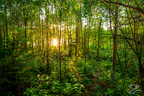 trees sunset summer canada forest landscape path 124 alberta refection drewmayphotography