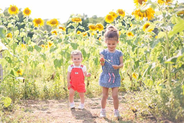 2014-08-08 Sunflower maze-033.jpg