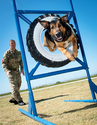 RAF Police Dog Training