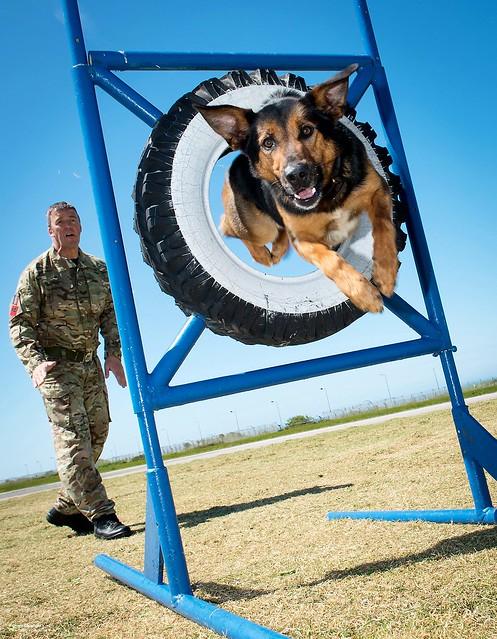 Tracker Dog Training Hemel Hempstead