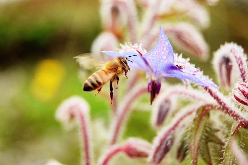 mehiläiset, sumuu, shopping 218