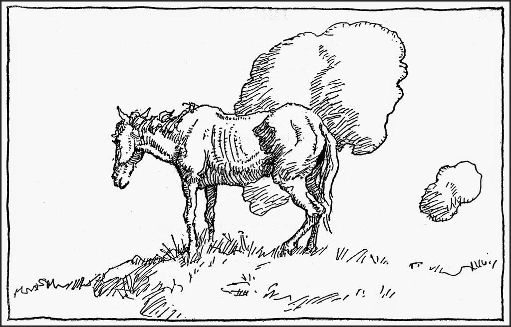 Wyeth_NC111