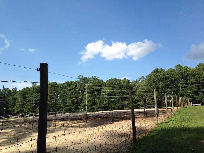 Down on the Horse Farm