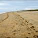 Tracks - Utah Beach ©Poul-Werner