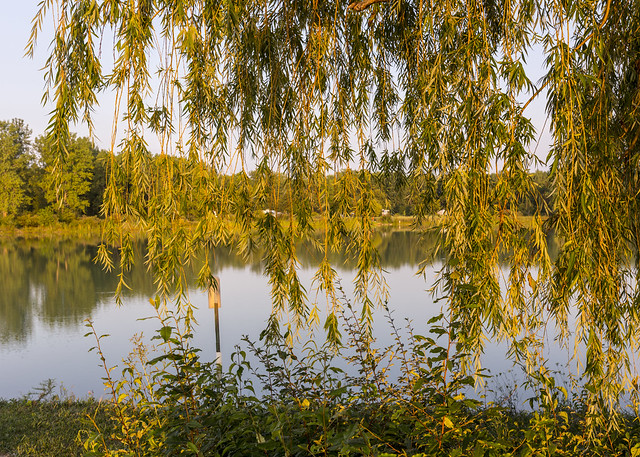 Willow and Lake
