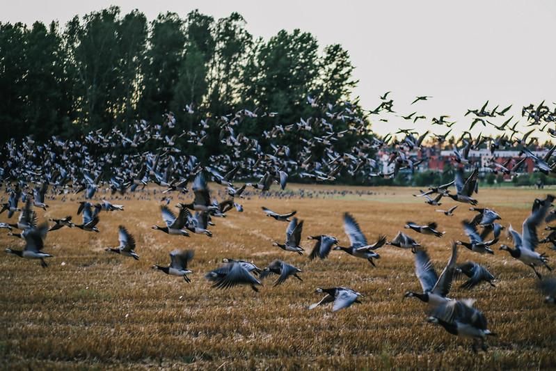 linnut (34 of 55)