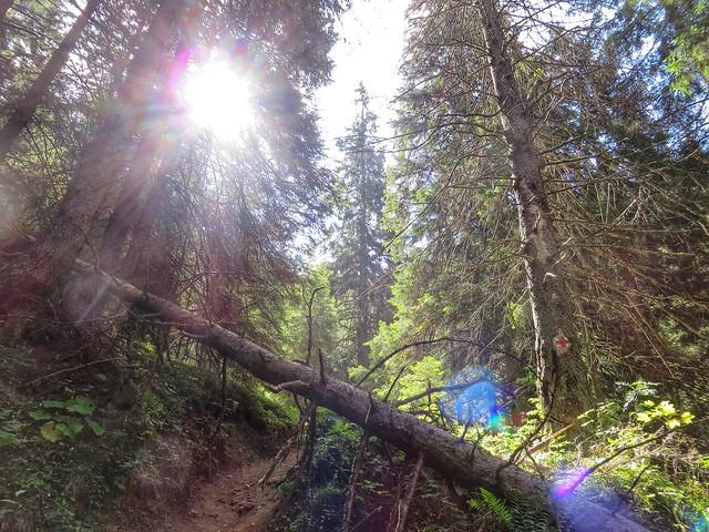 A tree blocks the path on Ceahlău Massif mountain