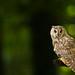 Long-eared Owl by markrellison