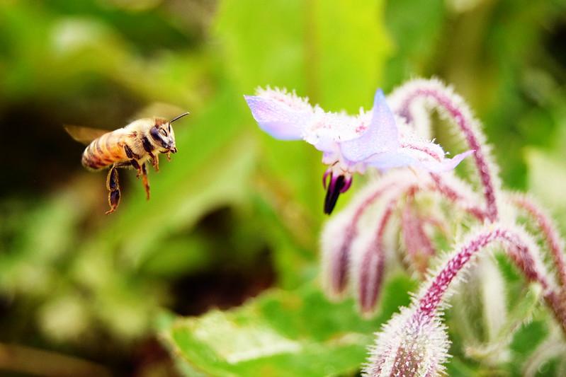 mehiläiset, sumuu, shopping 108