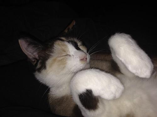 Tinny paws