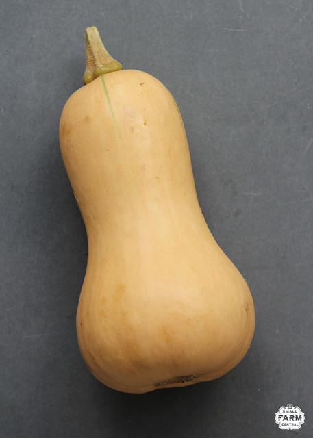 SFC_squash_butternut from Flickr via Wylio