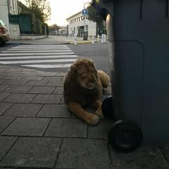 Le lion est mort ce soir... #peluche #trash