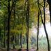 Autumn Woods by Stewart Black