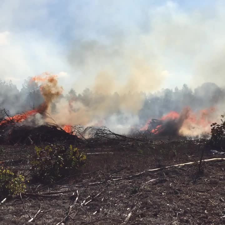 Control Burning in Arkansas with Forestry Associates!