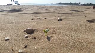 Bild av Lido Selene - chalet Sandy beach. lorenzo blangiardi lydser ibla ragusa buskers sicily sicilia barocco baroque three sand sea mare nature