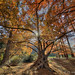 Dawn Redwoods National Arboretum by D. Scott McLeod