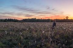 Amongst fields