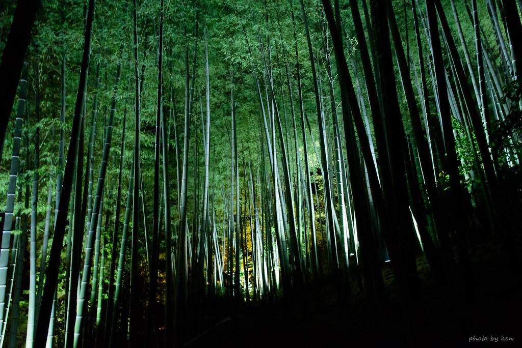 光台寺の竹林
