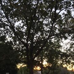 23 November 2016 #sunset #samespotforayear #vso #vsocam #nofilter
