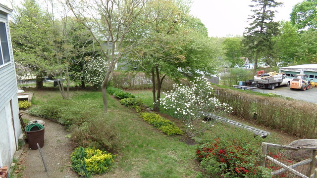 garden 13 May 2014