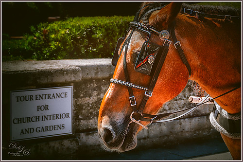 Image of a horse in St. Augustine, Florida using Nik Analog Efex Pro2