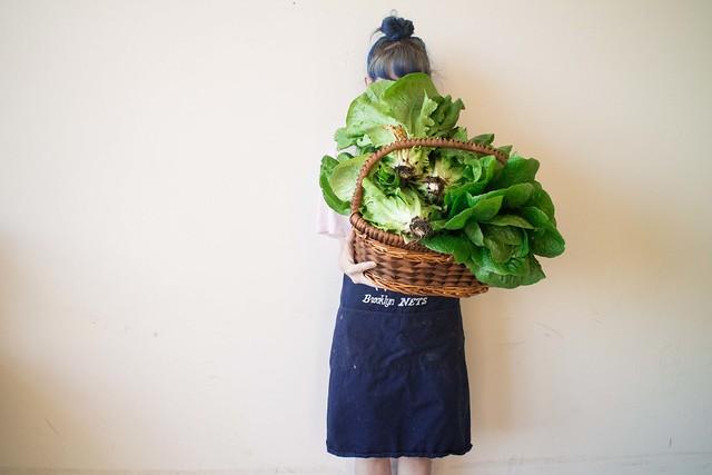Lettuce Harvest_4