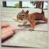 Made a friend today. #squirrelsofinstagram #unafraid