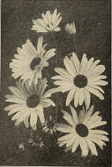 "Image from page 100 of ""Vaughan's seed store"" (1918)"