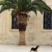 Strassenhund_Kreta