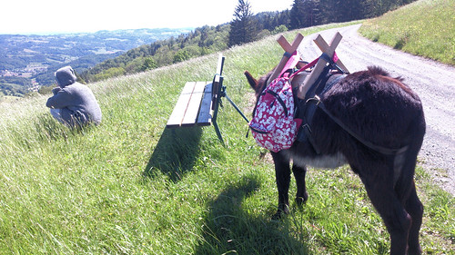 austria donkey