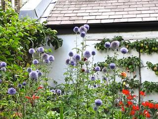 Back to Steve garden after 4 month