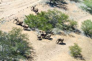 Desert Elephants of Namibia (Aerial)