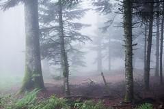 Brouillard - Photo of Saint-Priest-la-Prugne