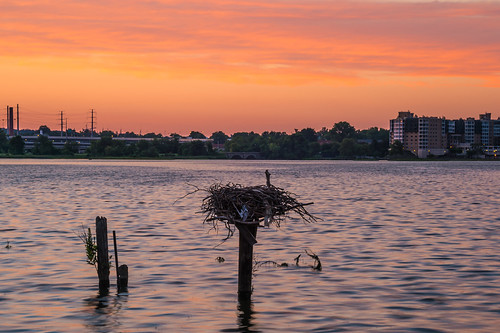 Osprey's Nest Earlier (Orange) by Geoff Livingston