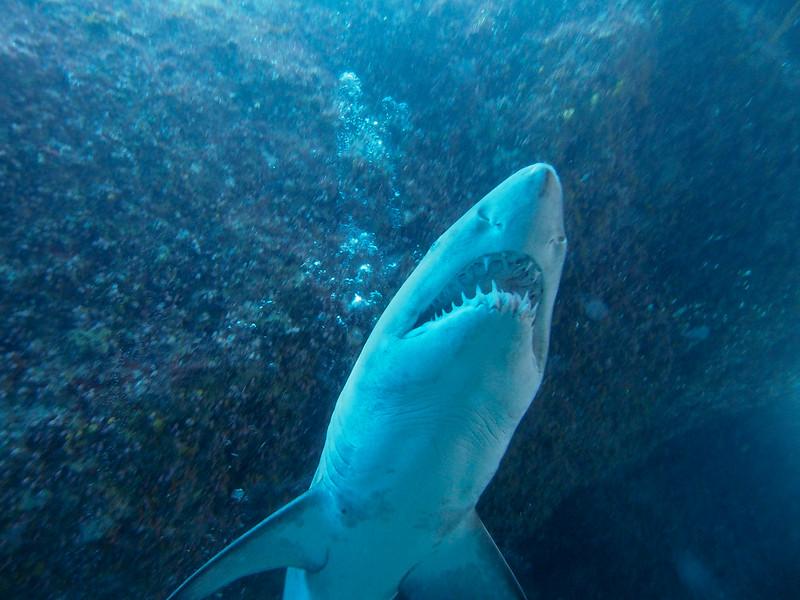 0716-38 OGASAWARA Diving