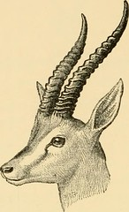 "Image from page 141 of ""Horn measurements and weights of the great game of the world: being a record for the use of sportsmen and naturalists"" (1892)"