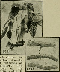 "Image from page 209 of ""The fruit-growers guide-book"" (1911)"