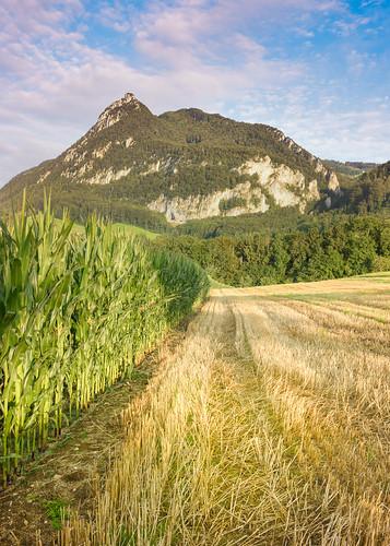 mountain sunrise switzerland corn fields 2470 aug1 d810 nikond810