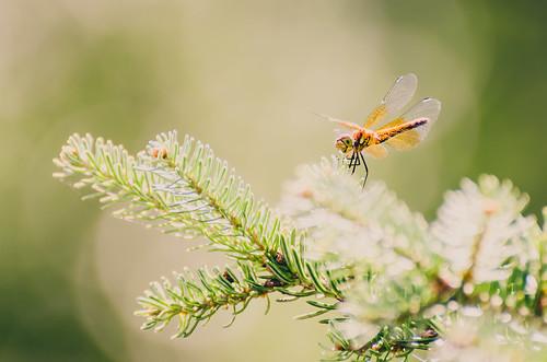 2014 08 03 Dragonfly