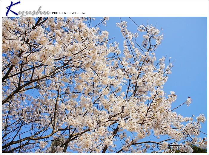 kyushu20140323017