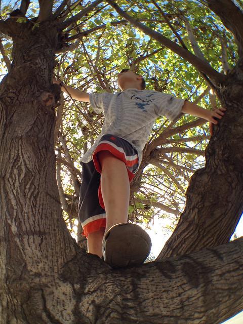 Boyce up a tree SKEW demo