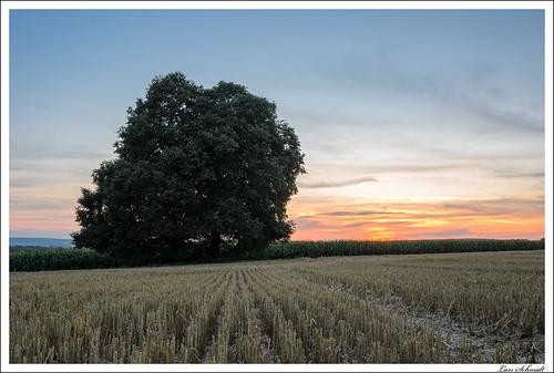 abendrot baum dämmerung feld himmel sonnenuntergang wolken schlotheim thüringen deutschland tageszeit landschaft bildbeschreibung pflanzen natur abenddämmerung