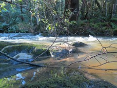2014-08-10 Lilydale Falls 107 - Pool above upper falls