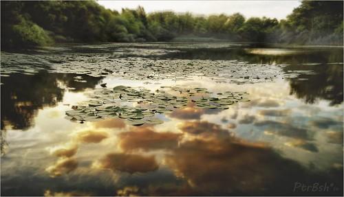 lake reflection art nature water clouds landscape sony alpha nimpheae