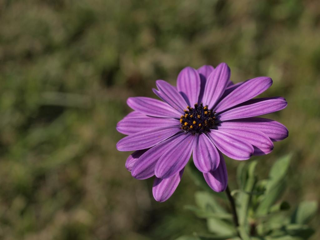Namenlose Blume auf unserer Terrasse