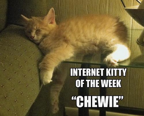 IKOTW chewie