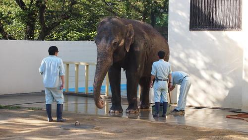姫路市立動物園 その02