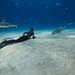 Shark Highway by OneoceanOnebreath